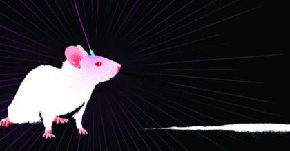 mice-on-drugs